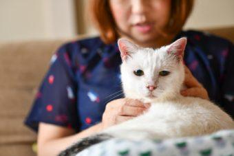 猫が教えてくれること「静かな死」/人形洋服作家・ナナノフさんの場合vol.1