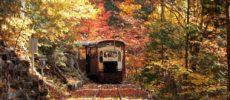 紅葉に包まれて走るトロッコ列車・赤沢森林鉄道1