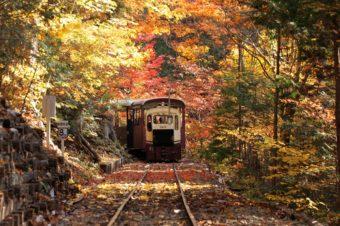 いつもとは違う目線で楽しむ。乗り物から眺める絶景紅葉<3選>