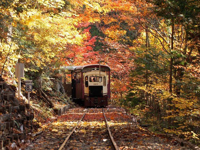 紅葉に包まれて走るトロッコ列車・赤沢森林鉄道2