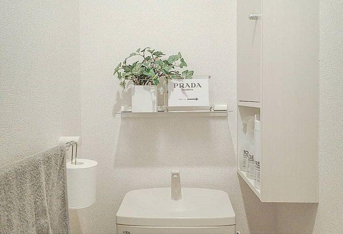 トイレをおしゃれにする、インテリア雑貨「植物・グリーン」