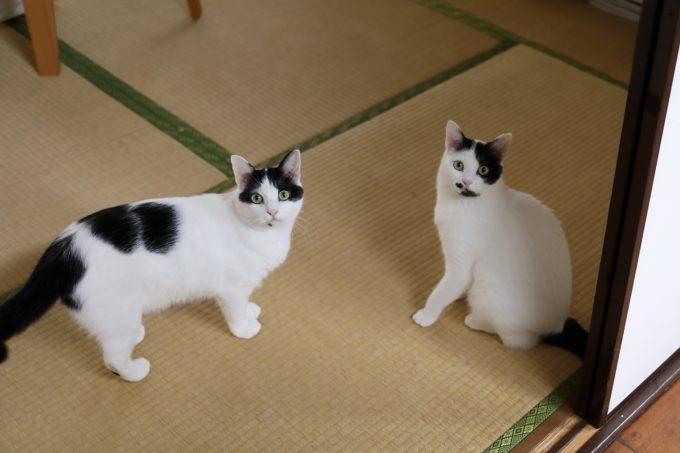 写真家・中村早さんの愛猫の2匹