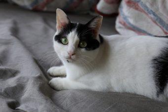 猫が教えてくれること「分かった気にならない」/写真家・中村早さんの場合vol.1