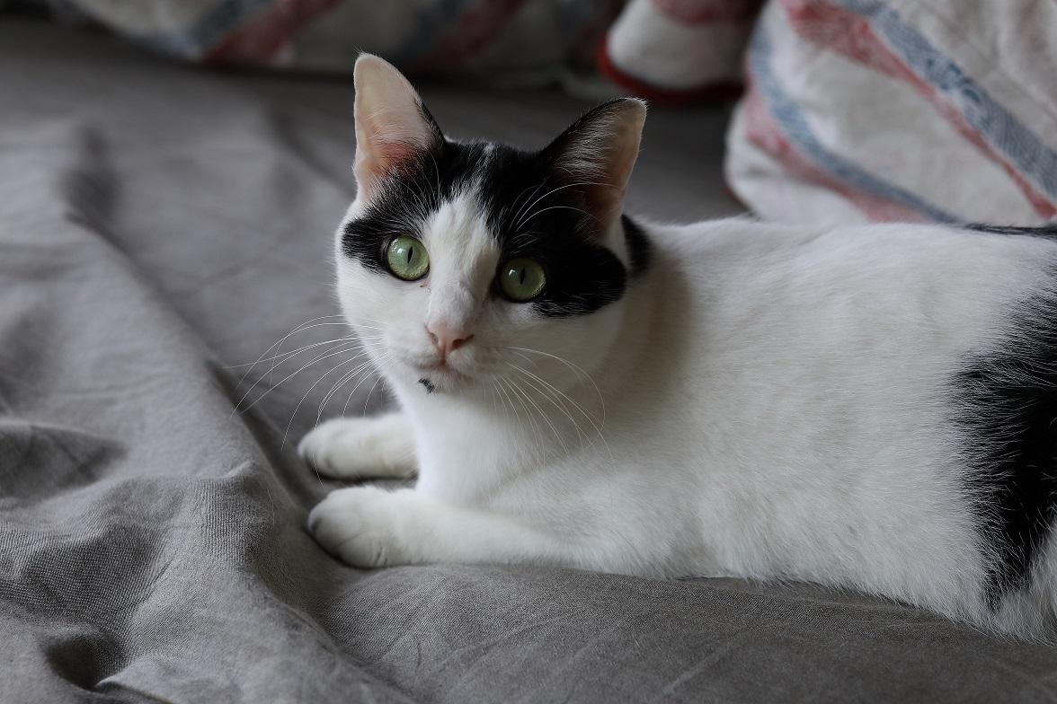 写真家・中村早さんの愛猫1