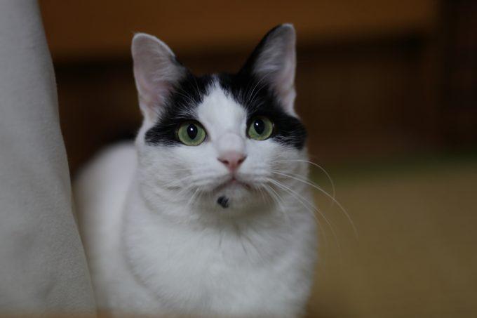 写真家・中村早さんの愛猫3