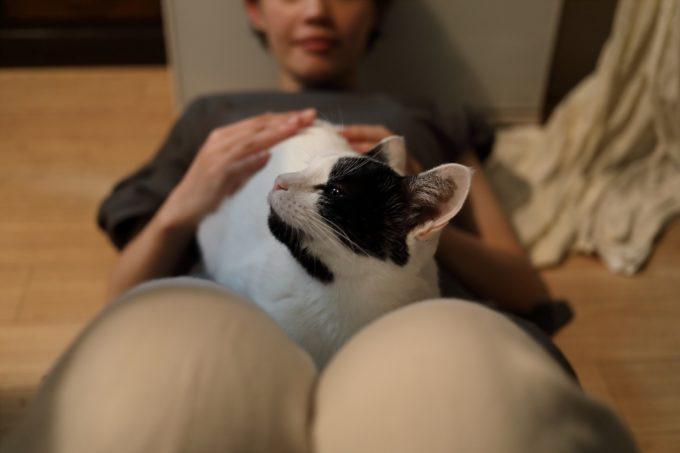 写真家・中村早さんの愛猫5