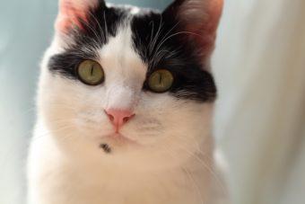 猫が教えてくれること「全身で見る」/写真家・中村早さんの場合vol.2