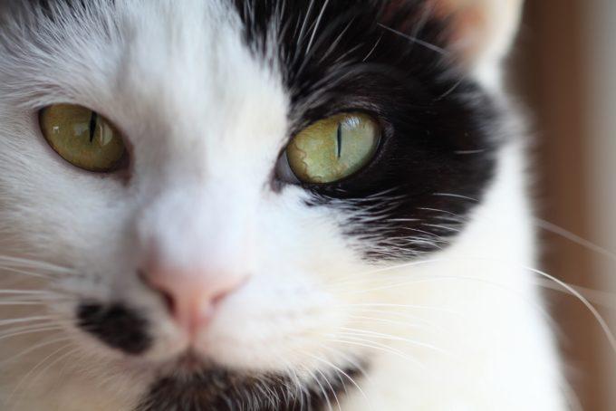 写真家・中村早さんの愛猫4