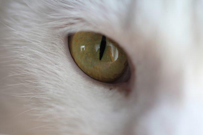 写真家・中村早さんの愛猫6