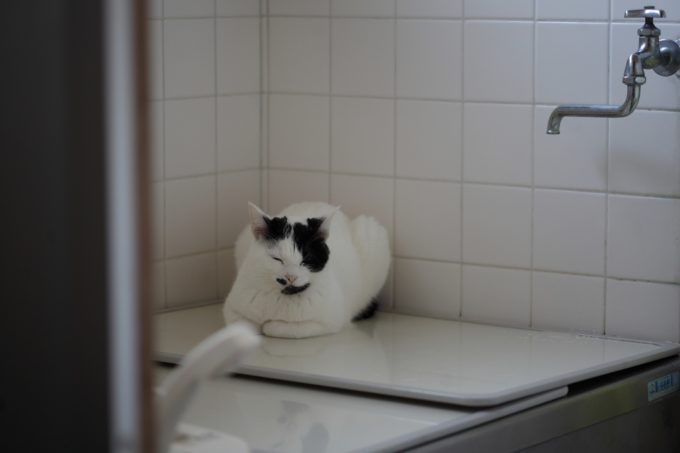 写真家・中村早さんの愛猫2
