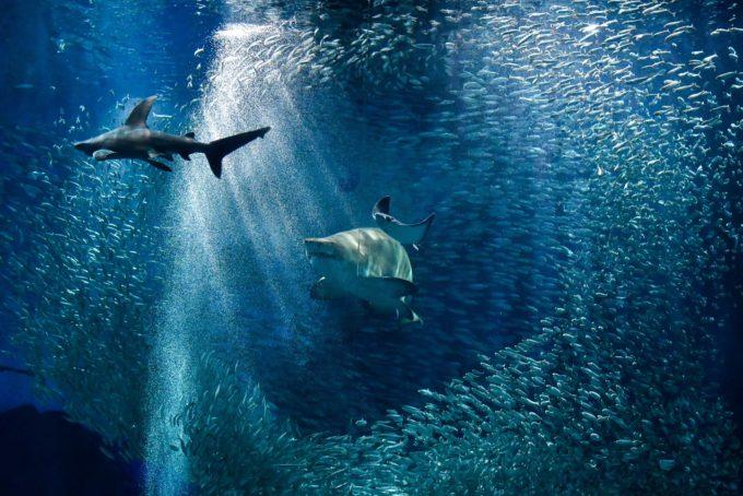 非日常を感じよう。大人も楽しめる癒しの水族館「マリンワールド海の中道」