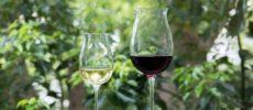 ワインが注がれた2つのグラスの写真