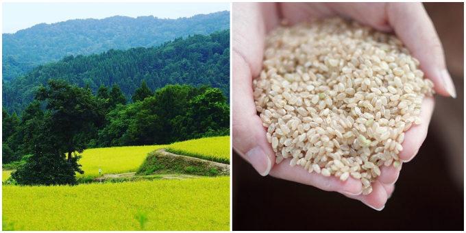 玄米と畑の写真