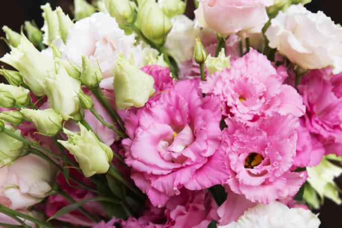 母の日や父の日のプレゼントにおすすめの感謝の花言葉を持つ花「トルコ桔梗」