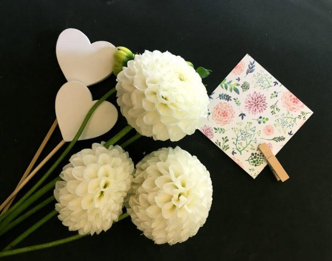 花束やブーケのプレゼントにおすすめ、感謝の花言葉を持つ花「白いダリア」