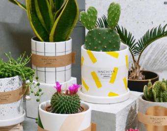 植物の個性を引き出す衣装。「HACHIYA」のデザイン鉢でお部屋に彩りを