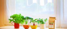 ガーデニング&家庭菜園が簡単にできる。水やりだけでOKな魔法の土「クリスタルグレイン」