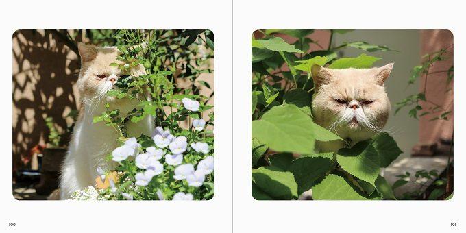 毎日眺めて癒されたい。こちらをチラっとのぞく猫たちが可愛い写真集『ねこチラ』