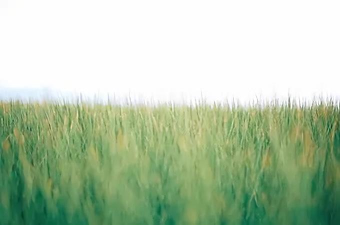 丁寧な手仕事で生まれる繊細さ。夏の耳元を軽やかに彩る「itiiti」の藺草アクセサリー
