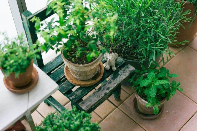 ガーデニング初心者でも安心。室内で簡単にハーブを育てる方法と栽培しやすい種類