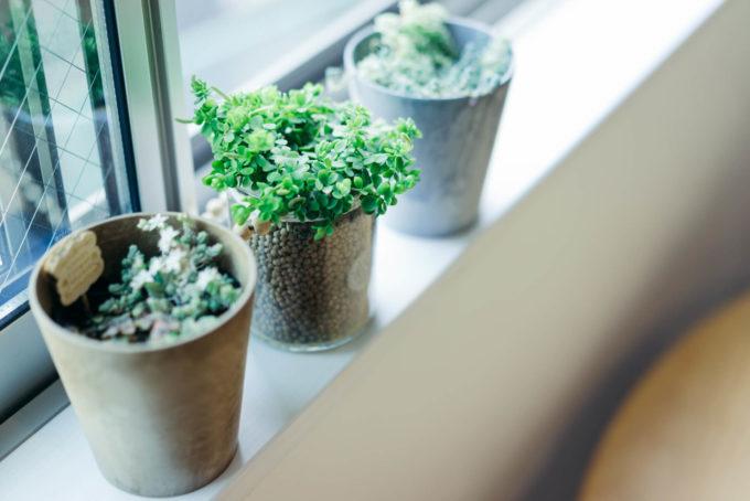癒しを運ぶ「グリーン」のある暮らし。人気の品種や飾り方のアイデア集