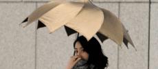 美しいフォルムにうっとり。独創性に富んだ傘を展開する「DiCesare Designs」