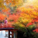 色彩豊かな景色に魅了。幻想的なライトアップと寺院で愉...