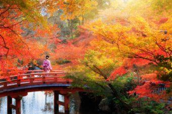 色彩豊かな景色に魅了。幻想的なライトアップと寺院で愉しむ紅葉スポット<関西3選>