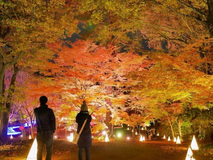 都内から日帰りでいける!絶景に出会える関東紅葉スポット3選