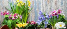 多肉植物やサボテンに続く注目の植物。花や葉、球根の形がかわいいバルバスプランツを育てよう