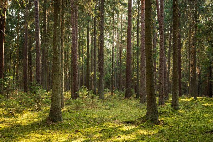 樹木の恵みをより良く巡らせる。木に人にも心地よい「BAUM」のプロダクト