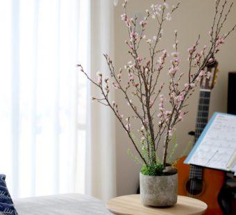 今年は自宅でゆったりと。「おうち花見」を目と食から楽しめるお取り寄せ5選