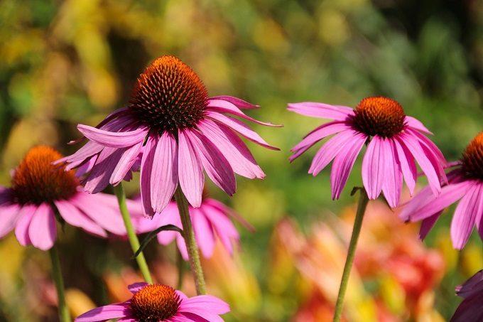 植物のエネルギーを味方につけて健やかな毎日を。 シーン別おすすめハーブティー<6選>