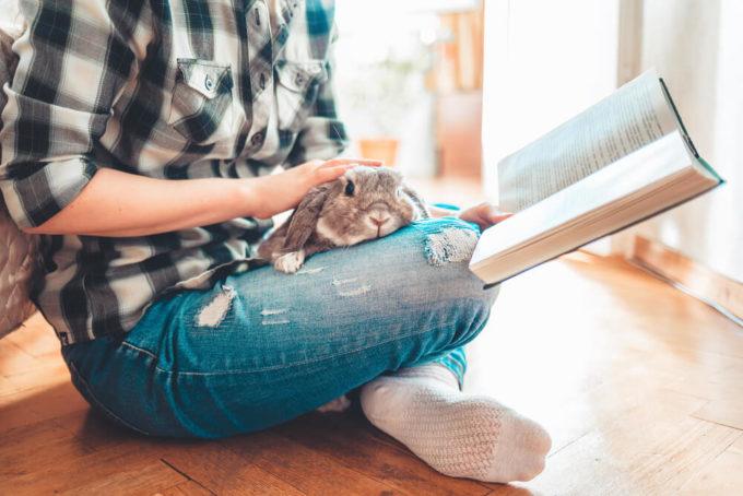 お世話するのも癒しの時間。ひとり暮らし・マンション暮らしでも飼いやすいペット特集