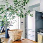 今っぽい植物の飾り方とは? センス溢れる部屋づくりが叶...