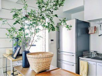 今っぽい植物の飾り方とは? センス溢れる部屋づくりが叶うグリーンのディスプレイ術