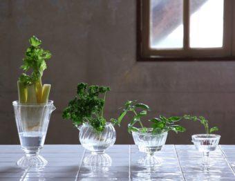 捨ててしまう根やヘタを観葉植物や食用に。「再生野菜」におすすめの野菜8種&フラワーベース
