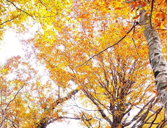 秋のお出かけにおすすめ、紅葉が絶景の福島県の裏磐梯の「グランデコリゾート」5